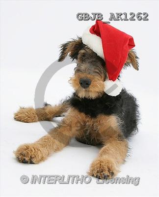 Kim, CHRISTMAS ANIMALS, photos(GBJBAK1262,#XA#) stickers