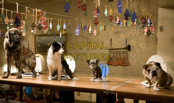 SCENE with LENNY, SHEP, ROMEO & COOPER.in Hotel for Dogs.*Filmstill - Editorial Use Only*.CAP/FB.Supplied by Capital Pictures.