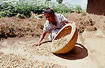 (96/73/16)-Ratnapura-Sri Lanka - December 27, 1996 -- Women drying harvested groundnuts/peanuts in the sun; FNS/SAN, agriculture, rural, labour -- Photo: © HorstWagner.eu