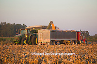 63801-06810 Grain wagon unloading corn into semi trailer in corn field, Marion Co., IL