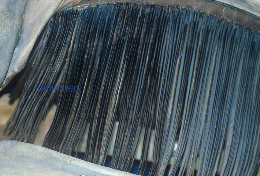 Whale baleen for filtering small food particles from water.
