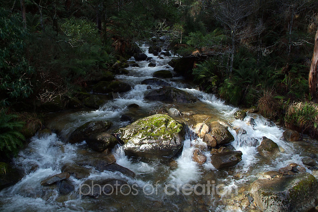Eight Mile Creek rapids.<br />