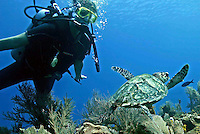 A diver watches a turtle  in  Roatan Island, Honduras .Roatan is the largest island of Honduras Bay Islands, near the largest barrier reef in the Caribbean Sea ..