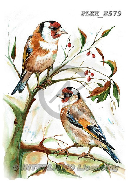 Kris, REALISTIC ANIMALS, REALISTISCHE TIERE, ANIMALES REALISTICOS, paintings+++++,PLKKE579,#a#, EVERYDAY ,birds