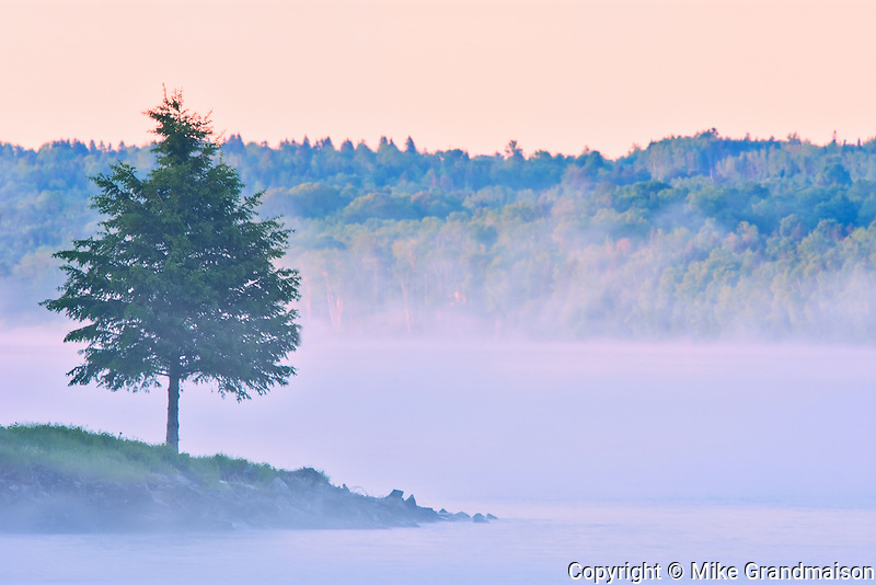 Tree and fog on the Saint John River, Mactaquac Provincial Park, New Brunswick, Canada<br />Mactaquac Provincial Park<br />New Brunswick<br />Canada