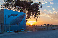 A a mural of whales on public works building  glows at sunrise south of San Leandro's Marina Park.