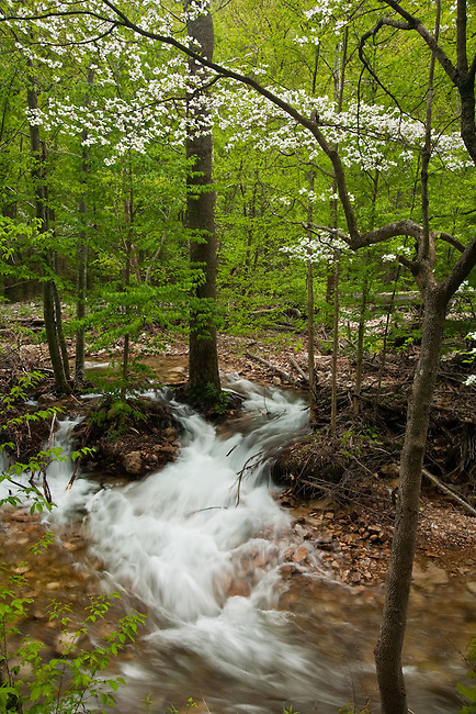 Spring flow along Saint Mary's River, Saint Mary's Wilderness Area