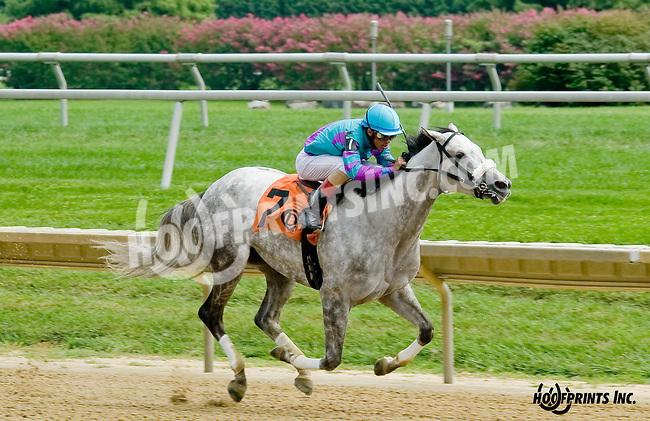 Sweet Maxine winning at Delaware Park on 8/20/14