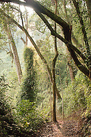 Jungle in the Nyungwe National Park, Rwanda