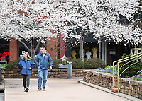 Julianna Munden (left) and Todd Cleveland, both of Fayetteville, take a walk around the Fayetteville square Sunday March 22, 2020. The National Weather Service is calling for a chance of rain early in the week with high temperatures in the 70s.Visit nwaonline.com/200323Daily/ for more images. (NWA Democrat-Gazette/J.T. Wampler)