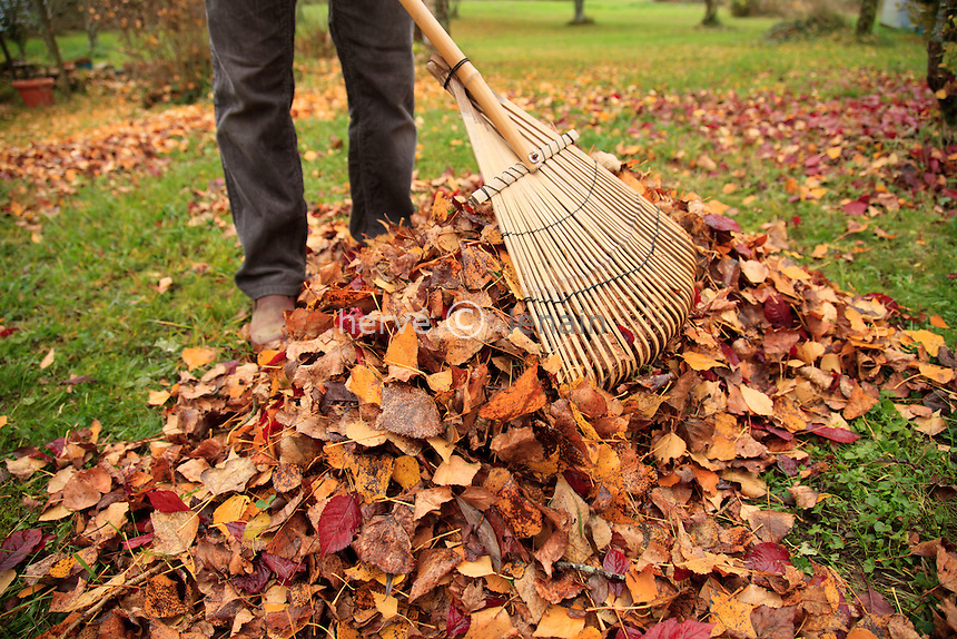 ramassage des feuilles en automne au rateau à feuilles // raking leaves in autumn with a leaf rake