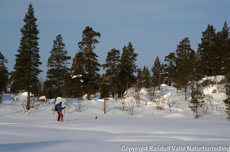 Jente går på ski i Femundsmarka ---- Girl skiing in Femundsmarka