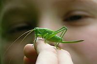 Mädchen, Kind mit Heuschrecke auf der Hand, Zwitscherschrecke, Zwitscher-Heupferd, Heupferd, Weibchen mit Legebohrer, Tettigonia cantans, twitching green bushcricket