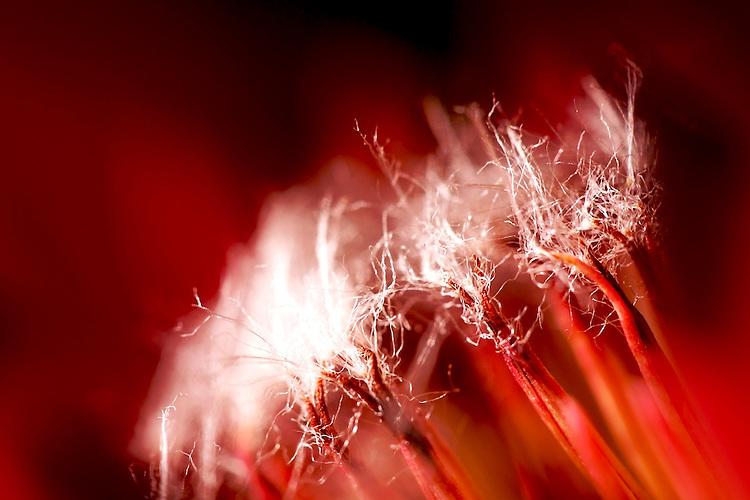Macro Flower Plants shots in the home garden.