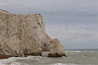 East Sussex Coastline, Seaford to Eastbourne. Splashpoint in Seaford