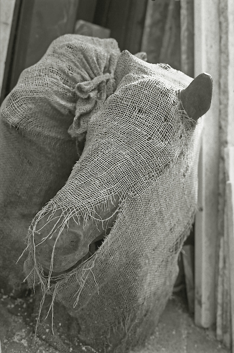 Two metal horse heads, from a carousel, sit in a salvage yard, wrapped in hessian sack cloth.