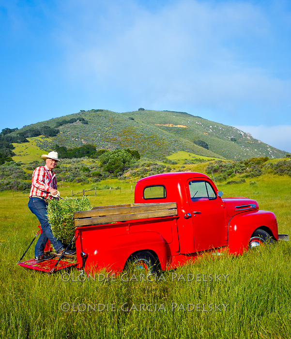 Cowboy bucking hay with his1949 Red Ford Truck, San Luis Obispo, California
