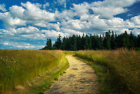 Path in Graham Oaks Nature Park with clouds and grass field. Wilsonville, Oregon