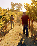 USA, California, Sonoma, Mark Aubert and wine grower Ulises Valdez in the Ritchie Chardonnay Vineyard, Sonoma County