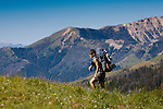 A backpacker in the Snowcrest Mountains east of Dillon, Montana