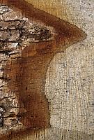 Europe/France/Centre/41/Loir-et-Cher/Forêt de Russy/Environ de Saint-Gervais-la-Forêt : Détail grume - Utilisé par la tonnellerie Seguin Moreau à Cognac