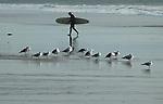Southern California Birds