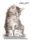 Marek, ANIMALS, REALISTISCHE TIERE, ANIMALES REALISTICOS, cats, photos+++++,PLMP2377,#a#