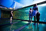 The Sydney Aquarium located in Darling Harbour  in downtown Sydney, features Australian aquatic life. Pictured is the Great Barrier Reef exhibit, which features an acrylic walk-through recreation of the coral environment.