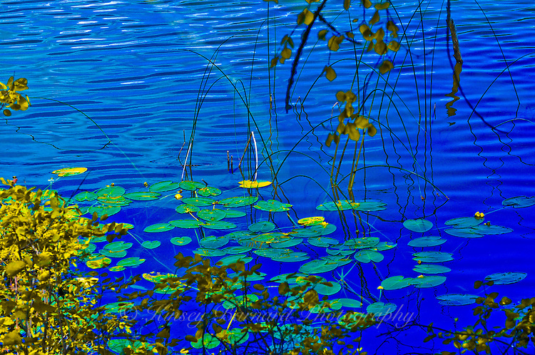 """LILY PADS IN AUTUMN""<br />