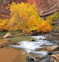 Autumn Glow, Zion