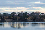 Riverbank, Kafue River, Kafue National Park, Zambia
