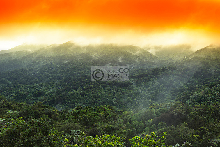 MIST RISING FROM RAIN FOREST CANOPY EL YUNQUE NATIONAL FOREST RIO GRANDE PUERTO RICO