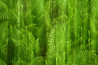 Fern blurred motion