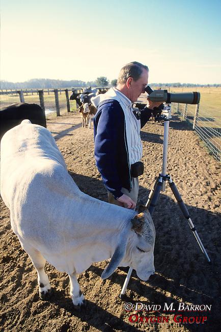 George Gee & Cow