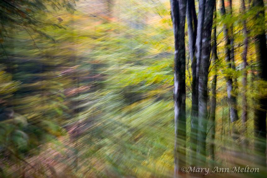 Great Smoky Mountains NP   9822