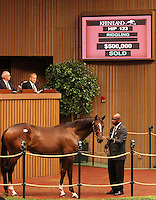 Hip #123 Tiznow - Memories of Silver at the Keeneland September Yearling Sale.  September 10, 2012.