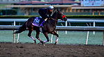 October 30, 2019: Breeders' Cup Juvenile Fillies entrant Lazy Daisy, trained by Doug F. O'Neill, exercises in preparation for the Breeders' Cup World Championships at Santa Anita Park in Arcadia, California on October 30, 2019. Scott Serio/Eclipse Sportswire/Breeders' Cup/CSM