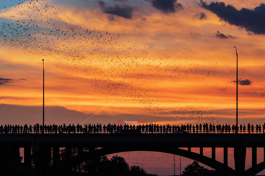 Spectacular sunset to watch Austin's Congress Bridge Bats take flight