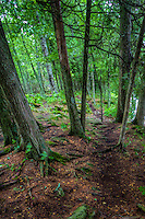 A wooded path at Cave Point County Park on Lake Machigan in Door County Wisconsin.