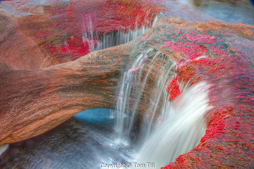 Colors at Cano Cristales, Colombia  Underwater plants (Macarenia clarigera) endemic to small stream and area, Llano area