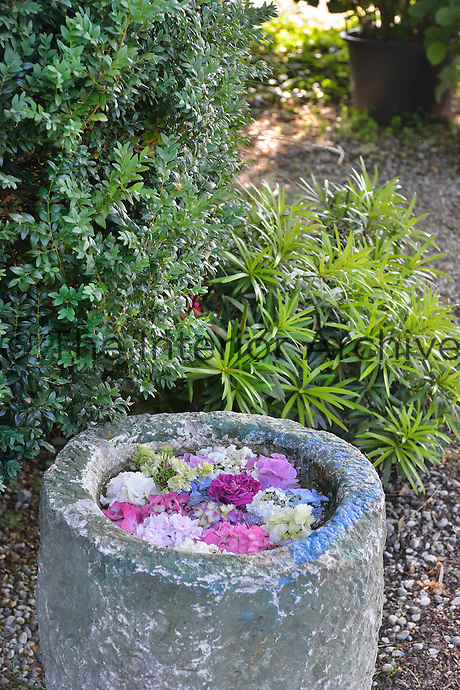 Colourful flower heads are arranged in a stone container. Two green foliage plants are planted behind.