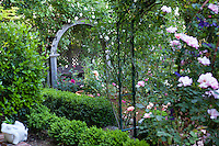 Secluded wooden bench under arbor in garden with roses and boxwood hedge