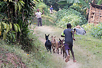 Ugandan Herder With Goats