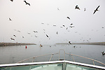 Early Morning Departure Out Of Santa Cruz Harbor
