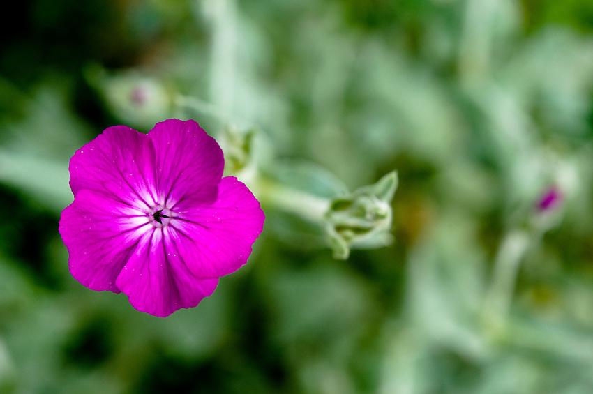 Purple flower bokeh