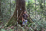 "A Penan chief standing next to a 'nailed' tree, marked with a tin can nailed to the tree, in Sarawak's Primary rainforest. They nail the tree with hundreds of 15 cm long nails making it impossible for the tree to be cut down with a chainsaw. Any attempt to cut the tree and it will break the chainsaw and hurt the logger. The Baram Penan indigenous people have successfully blockaded their forest from logging. They are settled since 60 years and resisted against the government logging companies longer than any other native peoples. They founded the ""Penan Peace Park"", their name for the rainforest territory around their longhouse settlements, which is still virgin primary rainforest, uncut by loggers. Baram, Sarawak 2014 <br />