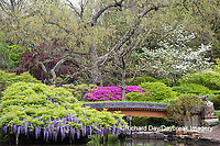 65021-03615 Japanese Garden in spring,  Missouri Botanical Garden, St Louis, MO