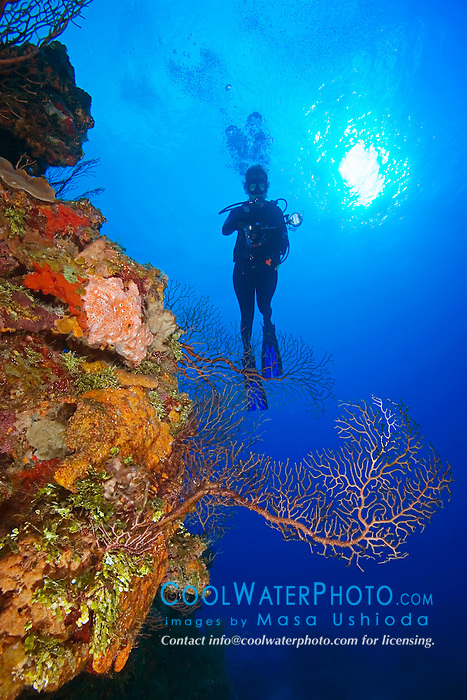 Woman scuba diver with underwater digital camera, Deepwater Sea Fan, Iciligorgia schrammi, and all kinds of sponges and corals, thriving, West End, Grand Bahama, Atlantic Ocean