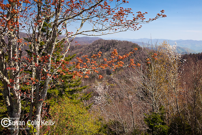 Springtime view of Newfound Gap, Great Smoky Mountains National Park, NC, USA