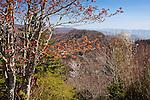 Springtime view of Newfound Gap, Great Smoky Mountains National Park, NC, USA